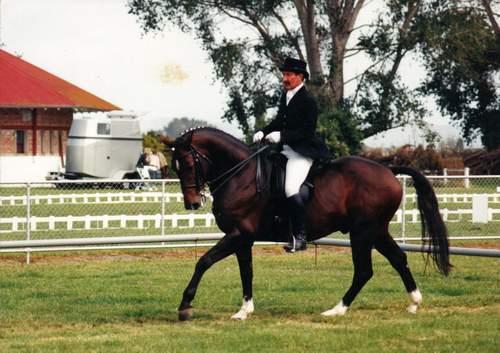 Viggo's Horse - 500x353, 34kB