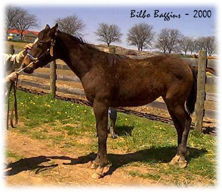 A Horse Named Bilbo Baggins - 453x392, 41kB