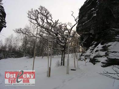 Narnia In Winter Images - 390x293, 19kB