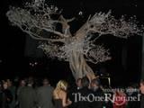 The White Tree - (800x600, 96kB)