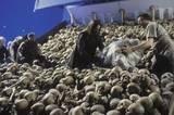 A Field Of Skulls - (800x531, 98kB)