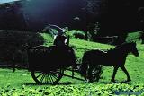 Gandalf and Frodo ride a cart to Bag End - (800x536, 85kB)