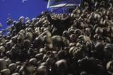 Thousands Of Skulls - (800x531, 78kB)