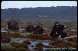Four Hobbits Cross The Midgewater Marches - (750x500, 58kB)