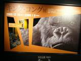 The Japanese King Kong Exhibition - (640x480, 60kB)