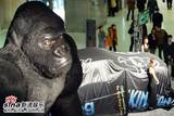 King Kong in China - (550x368, 51kB)