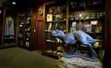 Weta Cave interior - (800x491, 114kB)