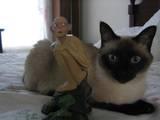 Mandy's Cat - (640x480, 34kB)